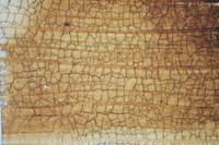 Cracked_Texture_0002