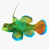 3d model realistic mandarinfish