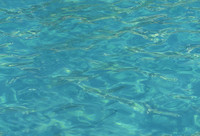 water-ripple-01