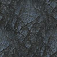 wrinkled bark tree beech tileable