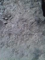 Stone s
