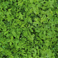 Seamless Ground Cover Plants