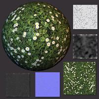 Grass (07) - Ground Texture