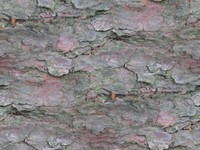 tree bark coniferous set