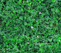 Seamless Ground Cover Plants(1)