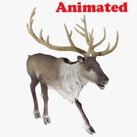 3d reindeer animal