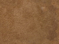 Rug Texture