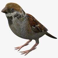 sparrow 3ds