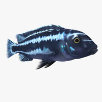tropical fish cichlid 3d 3ds