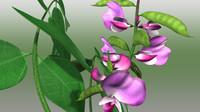 dolichos plants 3d model