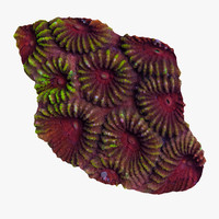 favia coral 3ds