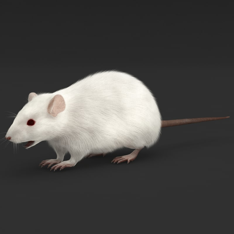 Mouse Rigged Fur_2.jpg