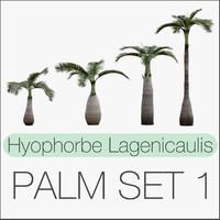 set hyophorbe lagenicaulis max