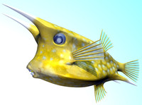 longhorn cowfish fishes c4d