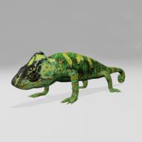 chameleon lizard 3d model