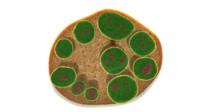 3d endospore spore
