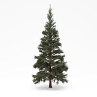 3d model conifer 03