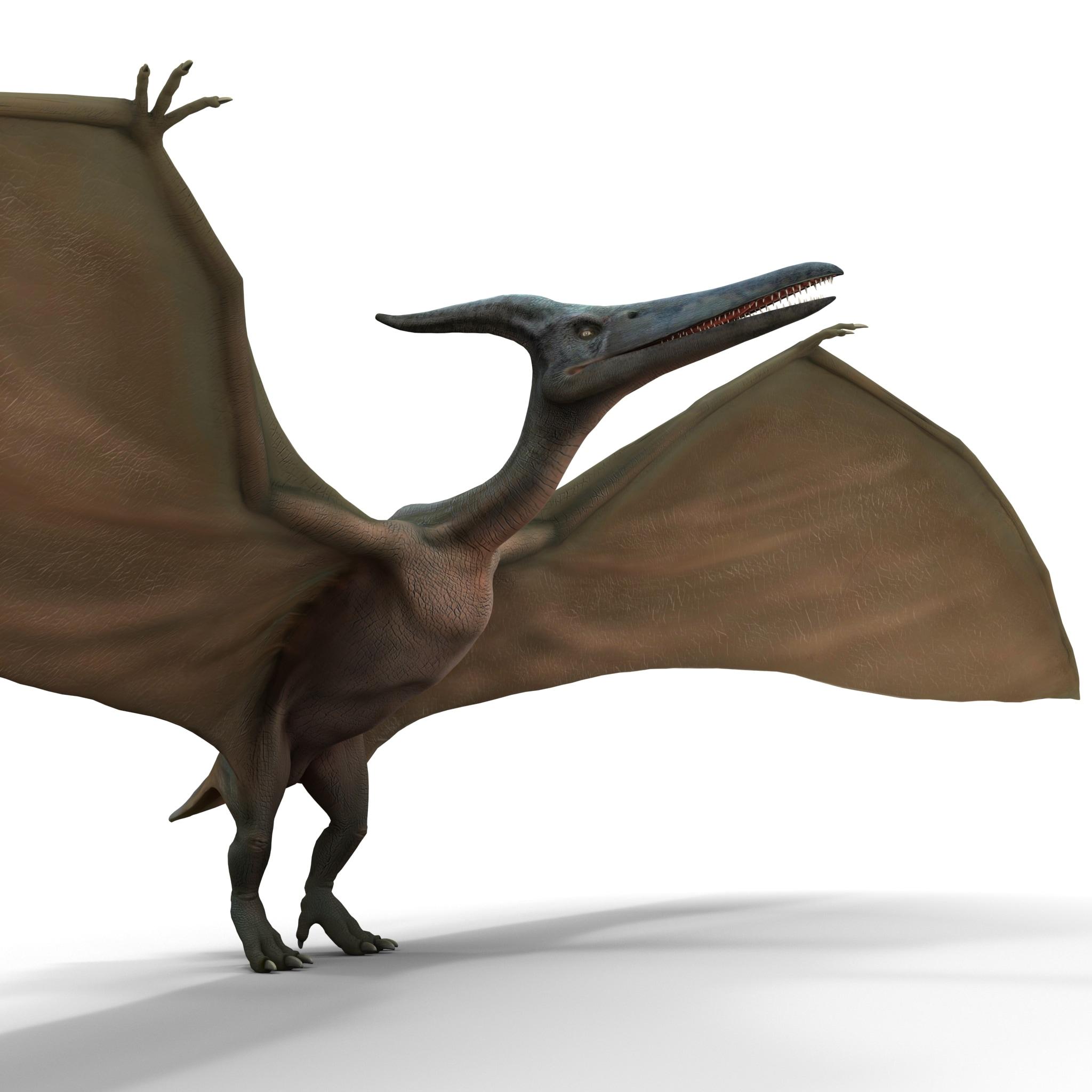 Pterodactyl Rigged_374.jpg