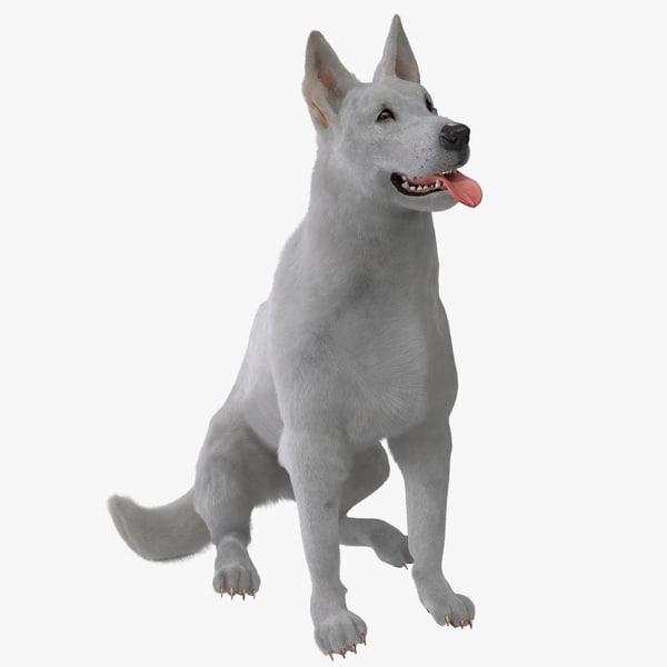 White Shepherd Dog Pose 4 Fur canine k9 german doggy doggie pet puppy vray