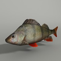 maya perch modeled