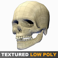 human skull polygons 3d 3ds