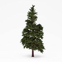 3d conifer 022 model