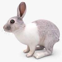 3d realistic rabbit model