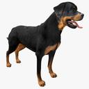Rottweiler 3D models