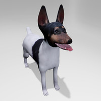 american toy fox terrier 3d model