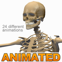 dxf human skeleton 24 animations