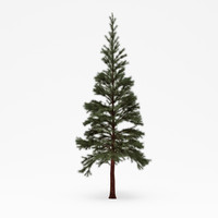 conifer 019 3ds
