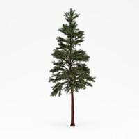 conifer 017 3d model
