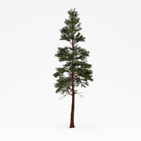 conifer 013 3d 3ds