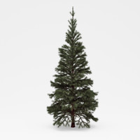 3d model of conifer 01