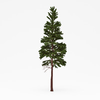 3ds max conifer 016