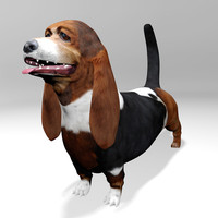 3d basset hound dog model
