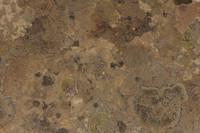 Mossy Desert Stone Pack