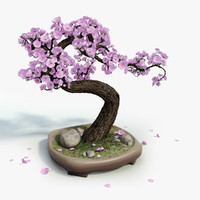 3d model sakura bonsai tree