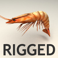 rigged shrimp 3d model