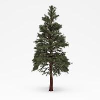 3dsmax conifer 021