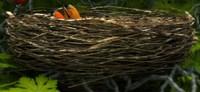 birds nest 3d model