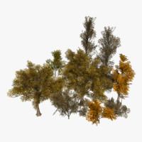 3d tree lods model
