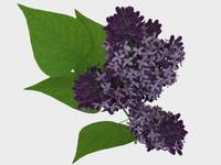 lilac led 3d max