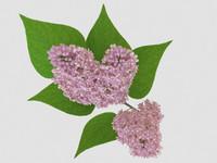 3d lilac led