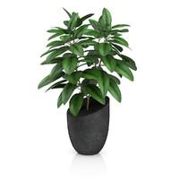plant black pot 3d model