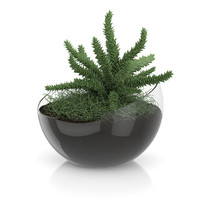 plant sphere glass pot 3d c4d