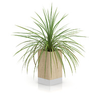 max small palm plant wooden