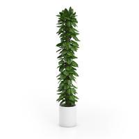 tall climbing plant 3d c4d