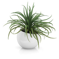 plant sphere pot 3d max