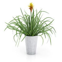 maya guzmania plant pot